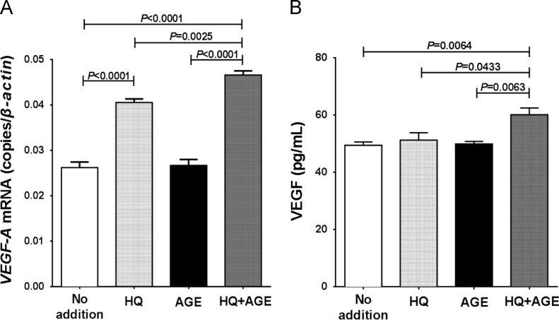 Induction of VEGF-A expression by the addition of HQ and/or AGE. (A) Expression of VEGF-A mRNA in ARPE-19 cells. ARPE-19 cells were treated with no addition, HQ, AGEs or combinations for 12 h. The level of VEGF-A mRNA was measured by real-time RT-PCR using β-actin as an endogenous control. Data are expressed as means±SEM for each group ( n =4). (B) Concentrations of VEGF in the ARPE-19 culture medium were measured by ELISA. ARPE-19 cells were treated with no addition, HQ, AGEs or combinations for 12 h. Data are expressed as means±SEM for each group ( n =4).