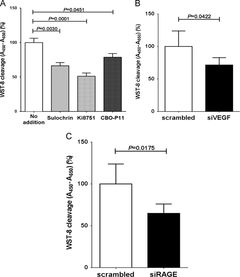 Inhibition of ARPE-19 cell proliferation by inhibition of VEGF signaling. (A) Effects of the VEGF inhibitors on cell proliferation. ARPE-19 were incubated with HQ+AGEs and three VEGF-A inhibitors, 10 µg/mL Sulochrin, 3 nM Ki8751 or 50 nM CBO-P11 for 12 h. After the treatment, cellular proliferation was measured by WST-8 assay. Data are exposed as means±SEM for each group ( n =6). (B) Effect of siRNA against VEGF-A on cell proliferation. SiRNA of VEGF-A was transfected into ARPE-19 cells and the cells were incubated with HQ+AGEs for 12 h. Cellular proliferation was measured by WST-8 assay. Data are expressed as means±SEM for each group ( n =5). (C) Effect of siRNA against RAGE on HQ+AGE-induced ARP19 cell proliferation. SiRNA of RAGE was transfected into ARPE-19 cells and the cells were incubated with HQ+AGEs for 12 h. Cellular proliferation was measured by WST-8 assay. Data are exposed as means±SEM for each group ( n =5).