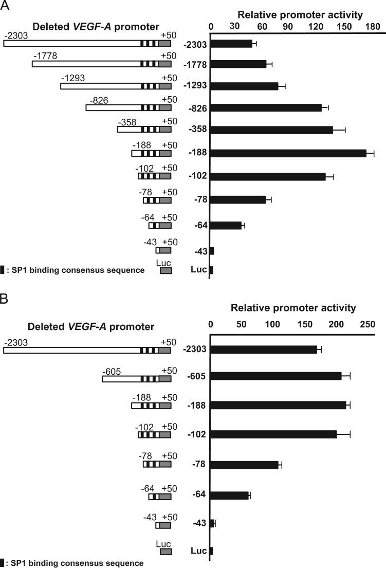 Localization of essential region for VEGF-A transcription. The promoter activity on deleted promoter of human VEGF-A gene was shown. A series of luciferase constructs containing promoter fragments with various 5ʹ-ends were transfected into (A) ARPE-19 and (B) h1RPE7 cells. The promoter activity was normalized and expressed relative to the activity of co-transfected β-galactosidase plasmid and was expressed relative to the activity of promoterless pGL4.17[ luc2 /neo]. Values are means±SEM for each group ( n =3–4). Possible binding sites for SP1 in the promoter region were black labeled in left panel.