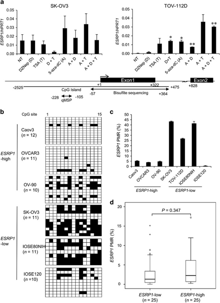 DNA methylation status in the promoter region of ESRP1 in ovarian cancer cell lines and tissues. ( a ) ESRP1 gene expression in ovarian cancer cells following treatment with epigenetic drugs. Data for qRT–PCR are presented as the mean±s.d. of two or three experiments. ESRP1 expression following treatment with epigenetic drugs was compared with that with no treatment (NT). Student's t -test; * P