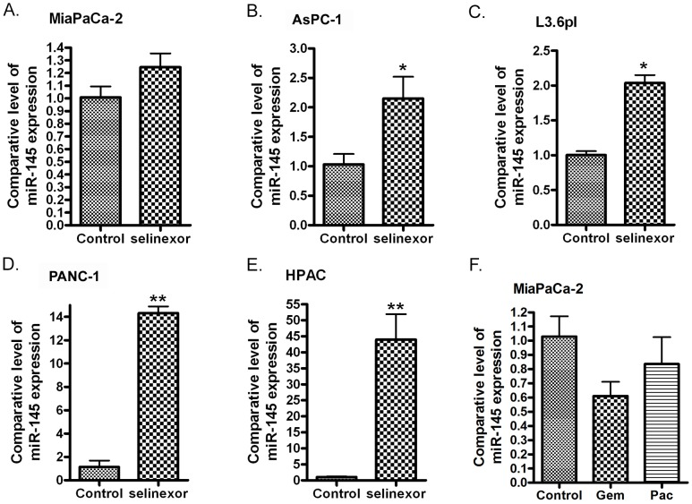 Treatment of PDAC cells with selinexor increased the expression of miR-145 MiaPaCa-2 (A) , AsPC-1 (B) , L3.6pl (C) , PANC-1 (D) and HPAC cells (E) were treated with 500 nM selinexor for 48 hours. MiaPaCa-2 cells were also treated with gemcitabine or paclitaxel for 48 hours. (F) (Gem: gemcitabine; Pac: paclitaxel). The total RNAs from each sample were extracted and subjected to real-time RT-PCR for detection of miR-145 expression (*: p