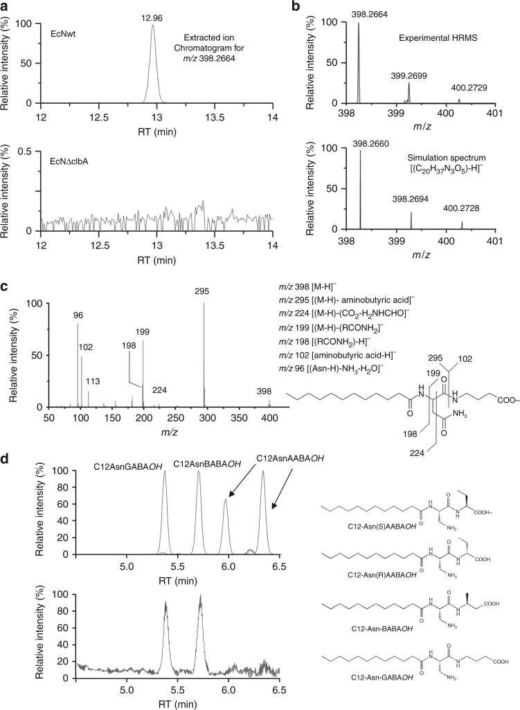 Characterization of C12-Asparagine-aminobutyric acid by LC-HRMS. a EIC of a lipidic extract of EcNwt (up) and EcNΔclbA pellet (down) for m / z 398.2664. No signal was detected in the mutated strain. b Natural isotopic distribution of the deprotonated molecule displayed by the high-resolution mass spectrum zoom obtained for the peak eluted 15.33 min in both TIC (top) at 12.96 min in the probiotic strain EIC (top) and natural isotopic pattern calculated with the formula [(C 20 H 37 N 3 O 5 )-H] − . Analogous natural isotopic patterns and similar m / z ratios measured and simulated for the monoisotopic [( 12 C 20 1 H 37 14 N 3 16 O 5 )-H] − ion and for the [( 13 C n C 20-n 1 H 37 14 N 3 16 O 5 )-H] − ] − (with n = 1 and 2) ions (within an accuracy of 1.8 ppm). Same isotopic profile and a mass accuracy of 1.8 ppm were obtained. c Product ion spectrum acquired via HCD (NCE = 35%) of the carboxylate anion [M-H] − ( m / z 398) generated in electrospray from the LC peak eluted at 12.96 min. d Upper panel: chromatogram obtained for the four synthesized standards: C12-Asn-γ-aminobutyric acid (C12Asn-GABA OH ), C12Asn-( S )AABA OH and C12Asn-( R )AABA OH , C12-Asn-α-aminobutyric acid (C12Asn-BABA OH ) and C12-Asn-α-aminobutyric acid (C12Asn-AABA OH ) (two diastereoisomers are detected which present similar HCD spectrum with NCE = 35%); lower panel: Chromatogram obtained for the lipid extract of EcNwt pellet
