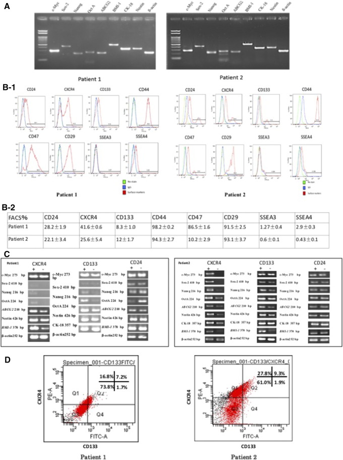 The expression of stemness genes and surface markers in primary endometrial cancer cells. (A) RT-PCR showed both two patients expressed stemness related genes including c-Myc , Sox-2 , Nanog , Oct4A , ABCG2 , BMI-1 , CK-18 , Nestin and β - actin , β - actin is the negative control. (B-1 and B-2) The expression levels of CD24, CD133, CD47, CD29, CD44, CXCR4, SSEA3, and SSEA4 by flow cytometry. (C) The mRNA expression of comparison and analysis between CD24, CD133, and CXCR4 positive and negative subpopulation in the two patients by RT-PCR. (D) The double CD133+CXCR4+ cells ration is 7.2% and 9.3%, respectively.