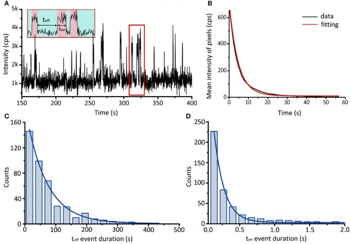 Single-molecule binding assay of AK and <t>ATP.</t> (A) Typical fluorescence trajectory of <t>BODIPY</t> FL-ATP associating and dissociating with AK. Association and dissociation are indicated by red and green bands, respectively. (B) Evolution of the mean intensity of BODIPY FL-ATP with time. By fitting with single exponential decay, we obtain the bleaching rate constant k 2 = 0.22 ±0.01 s −1 . (C,D) Histograms of t off and t on event durations. By fitting with distribution shown in Equation (1) and (2), we obtain the association rate constant k 1 = 1.5 ± 0.2 μM −1 s −1 and the dissociation rate constant k −1 = 6.9 ± 0.7 s −1 .