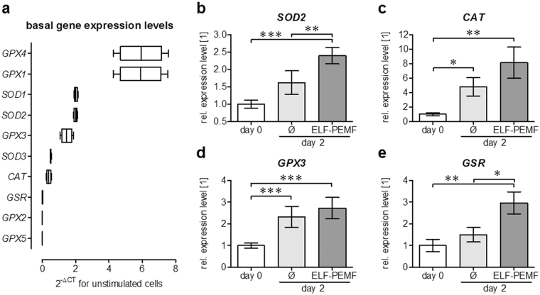 ELF-PEMF exposure induces gene expression of intracellular antioxidative enzymes in hOBs. ( a ) Basal expression levels of oxidative stress (•O 2 − and H 2 O 2 ) related genes in hOBs was determined using the RT² Profiler PCR Array human oxidative stress plus (Qiagen, Hilden, Germany). ( b – e ) Semi-quantitative RT-PCR revealed that expression of SOD2, CAT, GPX3 and GSR was increased by repetitive exposures to ELF-PEMF (7 min per day) during the osteogenic differentiation of hOBs. Densitometric analysis (ImageJ software) was performed with individual samples (N = 12) analyzed twice (n = 2) to reduce small loading differences. The mean signal intensity of cells on day 0 was set as reference. * p