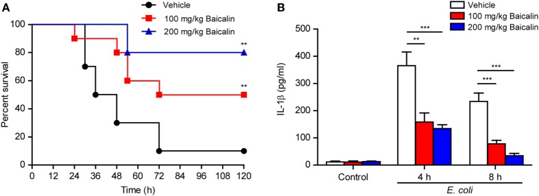 Baicalin administration prolonged mouse survival in bacterial sepsis. (A) C57BL/6 mice were administered (intragastrically) with baicalin (100 or 200 mg/kg body weight) or vehicle (2% Tween-80 in PBS) once 3 h before peritoneal injection with viable Escherichia coli (2 × 10 9 CFU/mouse). One hour after the bacterial injection, mice were intragastrically administered with baicalin or vehicle once again. Mouse survival was monitored every 6 h for five consecutive days. Kaplan–Meier survival curves were used to analyze the data (10 mice per group). The significance was evaluated by the log-rank (Mantel–Cox) test. (B) Mice were treated as in panel (A) . The serum levels of interleukin (IL)-1β at 4 and 8 h post bacterial infection were measured by cytometric bead array assay (five mice per group). ** P