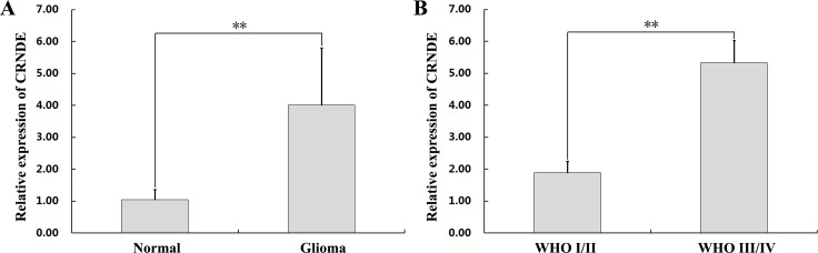 CRNDE upregulation in human glioma specimens (A) CRNDE levels in 47 clinical glioma specimens and 9 normal brain samples, assessed by qRT-PCR. ** P
