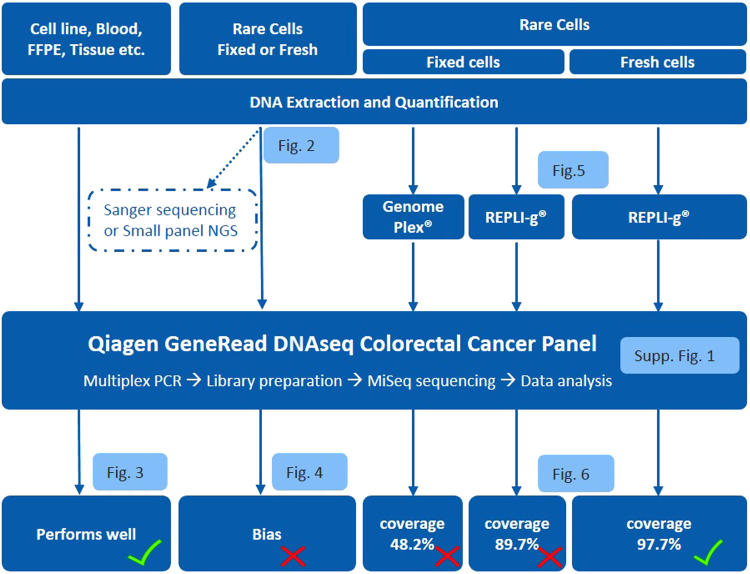 Workflow optimization for biopsy genomic profiling, tissue and CTCs. Qiagen QIAamp Micro Kit and GeneRead DNAseq targeted panel sequencing were applied on all types of cell samples. This overall workflow performs well when DNA amount is sufficient, i.e., from whole blood and tissue biopsy. For rare cells, DNA input is insufficient for targeted NGS, leading to a bias and the need for an extra step of Whole Genome Amplification (WGA). Two WGA kits were evaluated (WGA4 from Sigma and REPLI-g from Qiagen) and obtained low coverage for fixed cells, while REPLI-g was identified as optimal for fresh rare cells and used for a final validation on patient CTCs