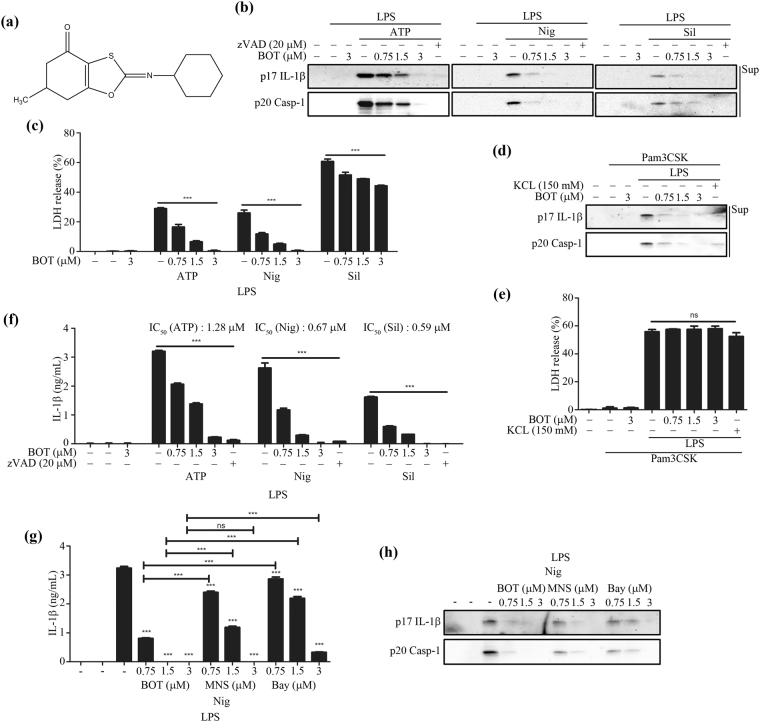 BOT-4-one inhibits NLRP3 inflammasome activation. ( a ) The molecular structure of BOT-4-one. LPS-primed BMDMs were treated with BOT-4-one or zVAD for 1 h and then stimulated with ATP, nigericin (Nig), or silica crystals (Sil). The caspase inhibitor zVAD was employed as a positive control for the general inhibition of inflammasome activations. ( b ) IL-1β (p17) and cleaved caspase-1 (Casp-1) in the supernatants (Sup) were analyzed by immunoblot. Full-length blots/gels are presented in Supplementary Fig. S9a . ( c ) LDH release in cell supernatants was measured by LDH assay. Pam3CSK4-primed BMDMs were treated with BOT-4-one or KCl for 1 h and then transfected with LPS. KCl was used as a positive control for the NLRP3 inflammasome-specific inhibition. The supernatants were analyzed by immunoblot ( d ) and LDH assay ( e ). Full-length blots/gels are presented in Supplementary Fig. S9b . ( f ) LPS-primed BMDMs were treated with BOT-4-one or zVAD for 1 h and then stimulated with ATP, nigericin (Nig), or silica crystals (Sil). IL-1β secretion in the cell supernatants was measured by ELISA. LPS-primed BMDMs were treated with BOT-4-one, MNS, or Bay11-7082 (Bay) for 1 h, and then stimulated with nigericin (Nig). The supernatants were analyzed by ELISA ( g ) and immunoblot ( h ). Full-length blots/gels are presented in Supplementary Fig. S9c . The data represent the mean ± SEM of three independent experiments; *** p