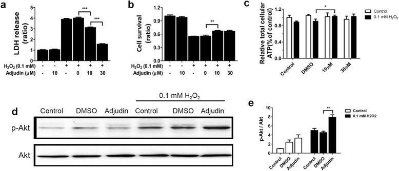 Adjudin pretreatment attenuated cell death and maintained the ATP level of NSCs after H 2 O 2 stimulation. Assays to evaluate whether adjudin pretreatment could attenuate cell death of NSCs after 0.1 mM H 2 O 2 exposure. Cell death and cell survival measured by LDH ( a ) and CCK-8 assay ( b ). ATP level of NSCs after H 2 O 2 stimulation with/without adjudin pretreatment ( c ). Levels of p-Akt and Akt detected by western blot analysis after H 2 O 2 treatment ( d ). Quantification of the densitometric value of protein bands normalized to total Akt ( e ). Bars represent mean ± SEM from three independent experiments. * P