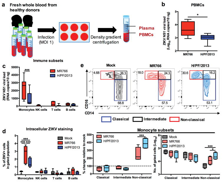 ZIKV infects CD14 + monocytes and drives monocyte subset shift to CD16 + non-classical subset during whole blood infection Whole blood derived from healthy donors ( n = 8) were infected with African ZIKV (MR766) or Asian ZIKV (H/PF/2013) at MOI 1 for 24 h. PBMCs were isolated at 24 hpi for fluorescence-activated cell sorting (FACS) or RNA extraction. a , Schematic representation of experimental set-up. b , Viral burden of total PBMCs or c , sorted immune subsets (CD45 + CD14 + monocytes, CD45 + CD56 + NK cells, CD45 + CD3 + T cells and CD45 + CD19 + B cells) were detected using viral load qRT-PCR with the specific probes and primers against the ZIKV NS1 RNA. d , Intracellular ZIKV Env antigen in various blood subsets were determined using FACS. e , Flow cytometry profiling of classical (CD14 + CD16 − ), intermediate (CD14 hi CD16 + ) and non-classical (CD14 lo CD16 + ) monocyte subsets of mock- and ZIKV-infected PBMCs were expressed as percentage change relative to mock controls, or presented as no. of cells per subset within a gated CD45 hi SSC hi myeloid population (10 5 cells). Data (mean ± SEM) were presented in box plot showing upper (75%) and lower (25%) quartiles, with horizontal line as median and whiskers as maximum and minimum values observed. * P