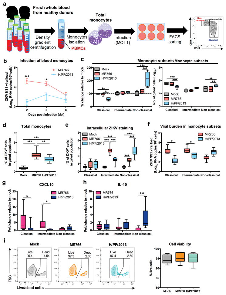 Asian ZIKV preferentially targets non-classical monocytes, driving specific IL-10 expression PBMCs were isolated from whole blood derived from healthy donors ( n = 6 – 11), followed by African ZIKV (MR766) or Asian ZIKV (H/PF/2013) infections at MOI 1 for 2, 5 or 8 dpi. a , Schematic representation of experimental set-up. b , Viral burden of total monocytes ( n = 6) during longitudinal infections detected using viral load qRT-PCR with the specific probes and primers against the ZIKV NS1 RNA. c , Flow cytometry profiling of classical (CD14 + CD16 − ), intermediate (CD14 hi CD16 + ) and non-classical (CD14 lo CD16 + ) monocyte subsets of mock- and ZIKV-infected monocytes were expressed as percentage change relative to mock controls, or presented as no. of cells per subset within a gated CD45 hi SSC hi myeloid population (10 5 cells). d , At 2 dpi, total monocytes ( n = 11) were harvested to determine infectivity of total monocytes or e , gated monocyte subsets using intracellular ZIKV Env antigen staining by FACS. f , Viral burden were determined within sorted monocyte subsets using viral load qRT-PCR. g , CXCL10 and h , IL-10 mRNA expressions within sorted monocyte subsets were determined using qRT-PCR. i , Cell viability of total monocytes were determined using live/dead staining by FACS analysis. Data (mean ± SEM) were presented in box plot showing upper (75%) and lower (25%) quartiles, with horizontal line as median and whiskers as maximum and minimum values observed. * P