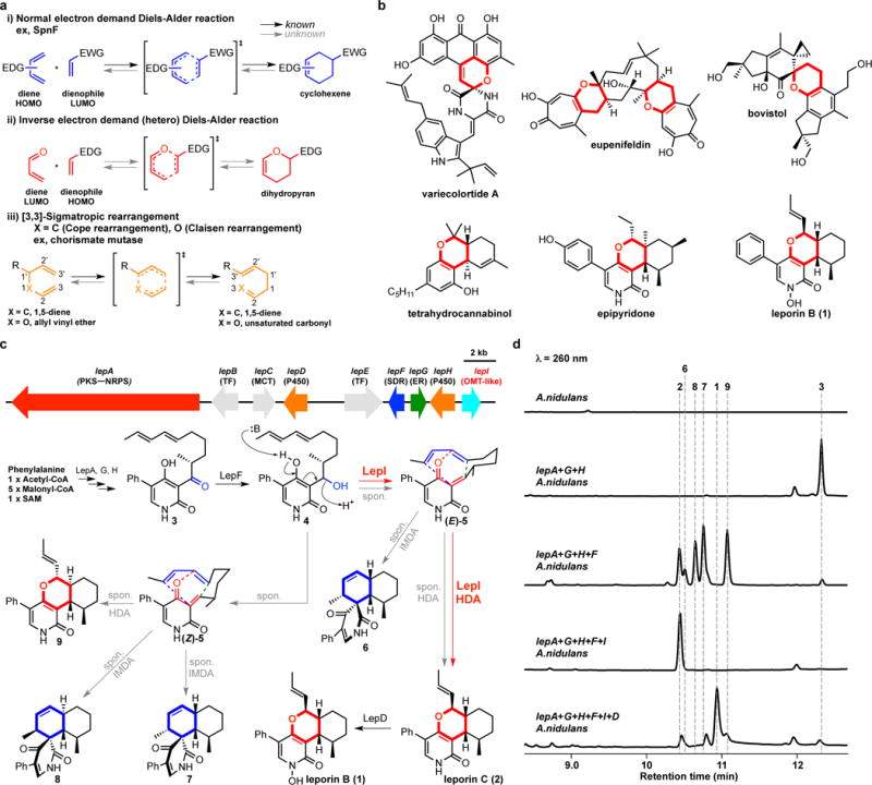 Enzyme-catalysed pericyclic reactions and the proposed inverse electron demand hetero-Diels-Alder (HDA) reactions in Nature. (a) Examples of enzymatic pericyclic reactions. (b) The structures of natural products containing dihydropyran, which would be biosynthesized by HDA reaction. Variecolortide A is naturally racemic; the relative stereochemistry of epipyridone and leporin B are shown. (c) The putative leporin biosynthetic gene cluster in A. flavus and assignment of encoded genes and biosynthetic pathway of leporins. PKS–NRPS, polyketide synthase–nonribosomal peptide synthetase; TF, transcription factor; MCT, monocarboxylate transporter; SDR, short-chain dehydrogenase/reductase; ER, enoylreductase; OMT, O -methyltransferase. The structures show the relative stereochemistry. (d) Analysis of metabolites from the transformants of A. nidulans . The peak at 12 min correspond to the tetramic acid product that is biosynthesized by LepA (PKS-NRPS) and LepG (ER).