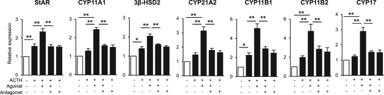 Effect of ACTH and a dopamine D 1  receptor agonist on steroidogenic enzyme mRNA expression. Steroidogenic enzyme mRNA expression levels in SF-1-transfected OSR1 +  cells treated with 2.4 µM ACTH, 1 µM SKF 83822 and 10 µM SKF 83566. Expression levels are normalised to levels of a housekeeping gene, β-actin. Statistical analysis was performed by one-way ANOVA followed by the Tukey-Kramer test. *P