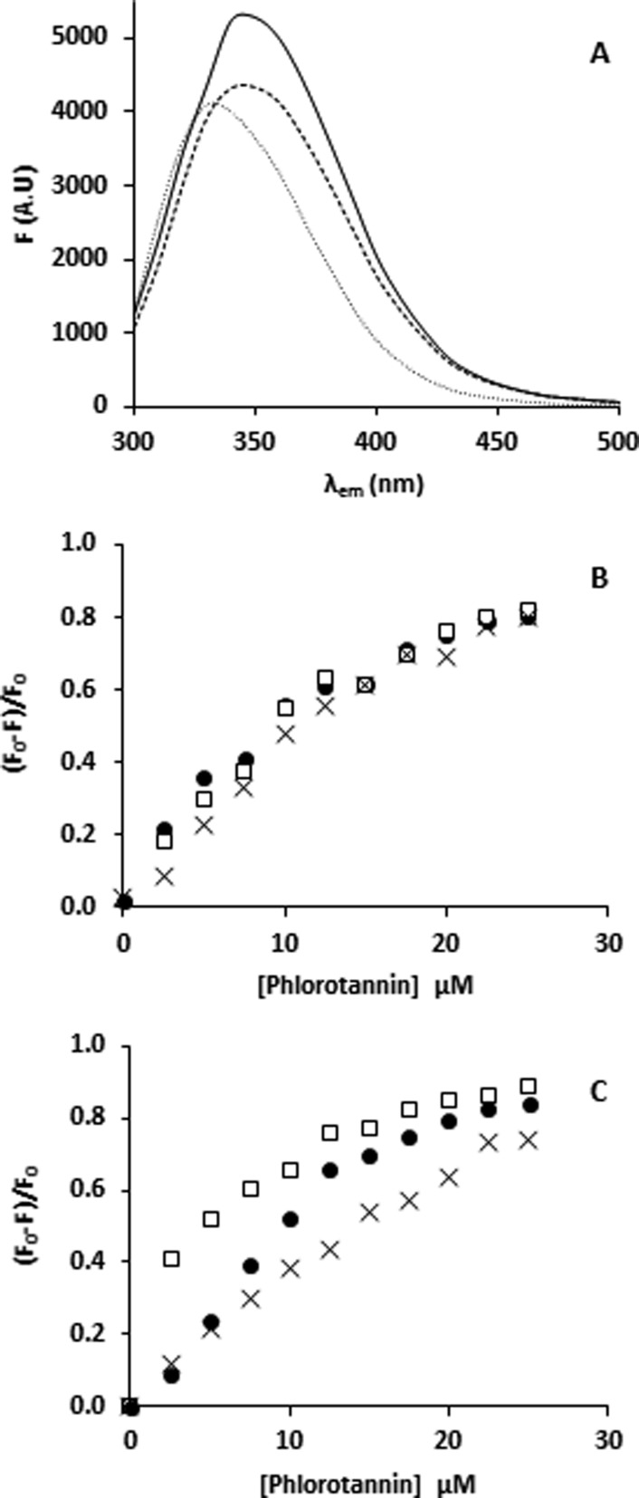 (A) Fluorescence spectra of BSA (λ ex = 280 nm) at pH 8 (−), pH 6.0 (- - -), and pH 3.0 (···). Stern–Volmer plots (λ em = 350 nm) of (B) 5 μM β-casein and (C) 5 μM BSA quenched by an increasing PhT concentration (0–25 μM, assuming an average MW = 2000 Da) at pH 8 (●), pH 6 (□), and pH 3 (×).