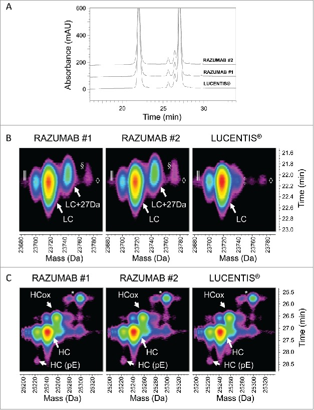 Fab subunit LC-UV/ESI-MS analysis. (A) Overlay of UV chromatograms at 214 nm of light and heavy chains of LUCENTIS® and RAZUMAB batches 1 and 2 after reduction and carbamidomethylation. Signal offset: 10%. (B) Time-resolved deconvolution for the light chain (LC). LC, and LC + 27 Da (in RAZUMAB samples), are annotated. ║: In-source dehydration, ◊: Guanidine adduct, §: Possible LC + (2 × 27 Da) in RAZUMAB batches, ‡: Sodium adduct. (C) Time-resolved deconvolution for the heavy chain (HC) species. HC, oxidized HC (HCox) and N-terminal pyroglutamate formation (HC(pE)) are annotated. *major sample preparation artifact is overalkylation with iodoacetamide as shown by the addition of +57 Da. Heat maps were generated from time-resolved deconvolution performed in parallel for all samples. Intensity is color-coded ranging from less intense (black) to most intense (red).