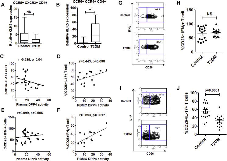 Decreased surface expression of DPP4 in Th17 cells of T2DM patients . (A, B) Comparison of relative KLK5 gene expression in sorted Th1 and Th17 cells (control, n = 10 T2DM, n = 14). (C, D) Correlations of percentage of CD26+IL17A+CD4+ T cells with plasma DPP4 activity (A; n = 26) and PBMC DPP4 activity (B; n = 16). (E, F) Correlations of percentage of CD26+IFNγ+CD4+ T cells with plasma DPP4 activity (C; n = 30) and PBMC DPP4 activity (D; n = 15). (G, H) Representative flow plots for IFNγ and CD26 staining (E) and the summary (F) of all the analyzed samples are shown (control n = 17 T2DM n = 12). (I, J) IL-17A and CD26 staining from healthy control (n = 20) and treatment naïve T2DM (n = 19) were determined by flow cytometry. Statistical analysis was performed by Mann–Whitney U test and Student's t test with Spearman correlation; *p