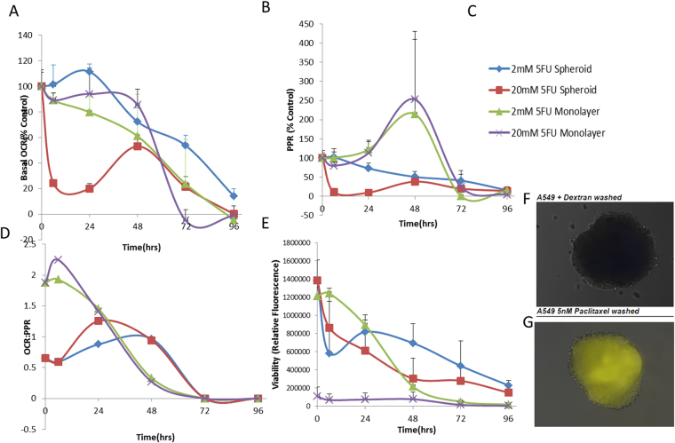 Effects of 5FU on 3D spheroid metabolic phenotype versus 2D monolayer in HCT116 colorectal cancer cell line. ( A ) Basal OCR as a percent of control (untreated 2D or 3D) upon treatment with 2 or 20 mM 5-Fluorouracil in 2D or 3D cell culture model. ( B ) Basal ECAR as a percent of control (untreated 2D or 3D) upon treatment with 2 or 20 mM 5-Fluorouracil in 2D or 3D cell culture model. ( C ) Group Key for Panel A,B,D,E. ( D ) OCR:PPR ratio of 2D or 3D cell model with 5FU treatment (2 or 20 mM). ( E ) Percentage viability of cells over time in the 2D or 3D model upon exposure to 2 or 20 mM 5FU using Cell Titer Glo assay. ( F ) A549 spheroid incubated with fluorescent dextran after washing. ( G ) A549 spheroid treated with fluorescent dextran and 5 nM paclitaxel (pseudo-color yellow).