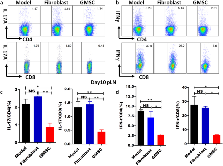 GMSCs down-regulated IL-17 and IFN-γ expression on CD4 + and CD8 + T cells in STZ-induced T1DM model. T1DM was induced using multiple low dose STZ injection and 1 × 10 6 GMSCs or fibroblast cells were injected into mice via intraperitoneal route on days 0, 7, 14, 21, 28. pLN was harvested on day 10. Lymphocytes were isolated and then stimulated in vitro with PMA (50 ng/ml) and ionomycin (500 ng/ml) for 5 hours, with brefeldin A (10 μg/ml) added in the last 4 hours, and intracellular expression of IFN-γ and IL-17 on CD4 + and CD8 + T cells was analyzed by flow cytometry. ( a , b ) Representative flow data of IFN-γ and IL-17 expression gated on CD4 + T cells and CD8 + T cells in draining LN (pLN). ( c , d ) Expression of cytokines, including IFN-γ, IL-17 on CD4 + T and CD8 + T cells in the draining LNs of T1DM mice. Data are presented as the mean ± SEM from two independent experiments (n = 5). *P
