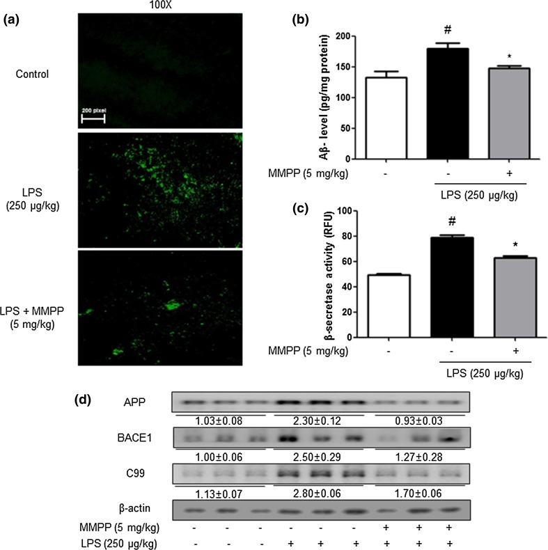 Inhibitory effects of MMPP on accumulation of Aβ 1-42 in the brain of LPS-injected mice. ( a ) Aβ accumulation in the brains of LPS-injected mice was determined by thioflavin S staining. The levels of Aβ 1-42 in mice brain ( n = 5) were measured by ELISA ( b ). The activity of β-secretase in mice brain ( n = 5) was investigated using assay kit ( c ). The expression of APP, BACE1 and C99 was detected by Western blotting using specific antibodies in the mouse brain ( d ). For the cropped images, samples were run in the same gels under same experimental conditions and processed in parallel. Each blot is representative for three experiments