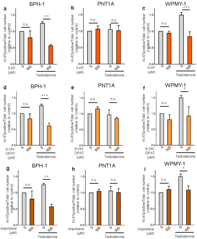 5-HT, 5-Htr1a specific agonist and 5-Htr1b specific agonist inhibits cell proliferation in BPH-1 and WPMY-1 human prostatic cells without any effect in PNT1A cells. ( a , b , c ) Effect of 5-HT, ( d , e , f ) 5-Htr1a specific agonist, <t>8-OH-DPAT,</t> and ( g , h , i ) 5-Htr1b specific agonist, Anpirtoline, on cell proliferation of BPH-1, PNT1A and WPMY-1 cells as quantified by Ki-67 positive cells/total cell number ratio. The data are expressed relative to control condition (0 µM 5-HT without testosterone supplementation) and were reproduced in at least three independent experiments. Error bars indicate s.e.m. n.s . non-significant; 5-HT, serotonin; * p