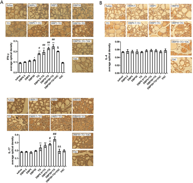 Th1/Th2 imbalance and Th17 immune response. ( A ) Immunohistochemistry and average optical density for IFN-γ, F DBP = 5.596 (p = 0.002), F TG = 142.67 (p = 0.000), F DBP*TG = 1.114 (p = 0.351). ( B ) Immunohistochemistry and average optical density for IL-4, F DBP = 0.537 (p = 0.659), F TG = 1.419 (p = 0.24), F DBP*TG = 0.168 (p = 0.917). ( C ) Immunohistochemistry and average optical density for IL-17 F DBP = 6.966 (p = 0.001), F TG = 93.46 (p = 0.000), F DBP*TG = 4.136 (p = 0.011). Magnification = ×40. *p