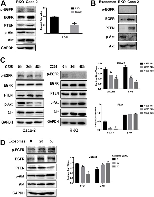 Exosome-treated Caco-2 cells showed reduced PTEN and increased phosphor-Akt amounts. A , B , Western blot was used to assess the expression levels of p-EGFR, EGFR, PTEN p-Akt, Akt and GAPDH in RKO, Caco-2 cells and their derived exosomes. Data are reported as means±SD. *P