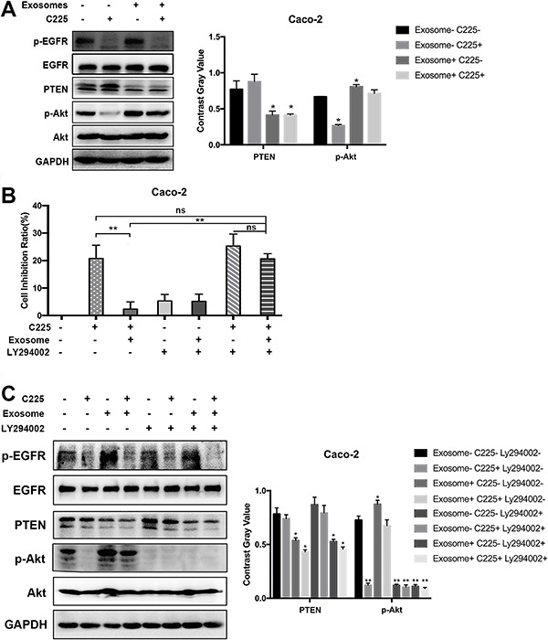 RKO-derived exosomes induced cetuximab resistance in Caco-2 cells via the PTEN/Akt pathway. A , Western blot was used to detect the expression levels of p-EGFR, EGFR, p-Akt, Akt, PTEN, and GAPDH in Caco-2 cells treated with cetuximab (10 μg/mL) for 48 h after pre-treatment with RKO-derived exosomes (50 μg/mL) for 48 h. B , The MTT assay showed that the Akt inhibitor LY294002 reversed the RKO-derived exosome induced C225 drug resistance in Caco-2 cells. Data are reported as means±SD. *P
