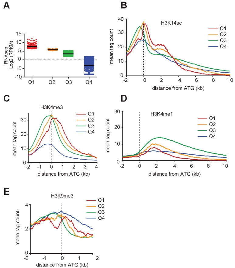 PTM distribution and gene expression in T. gondii . Genome-wide PTM occupancy profiles at peri-ATG regions are plotted for the gene groups ranked by ( a ) their mRNA levels, ( b ) H3K14ac, ( c ) H3K4me3, ( d ) H3K4me1, and ( e ) H3K9me3 are shown. The y-axis shows the average tag count of the enrichment. The vertical dashed line indicates the position of the ATG.