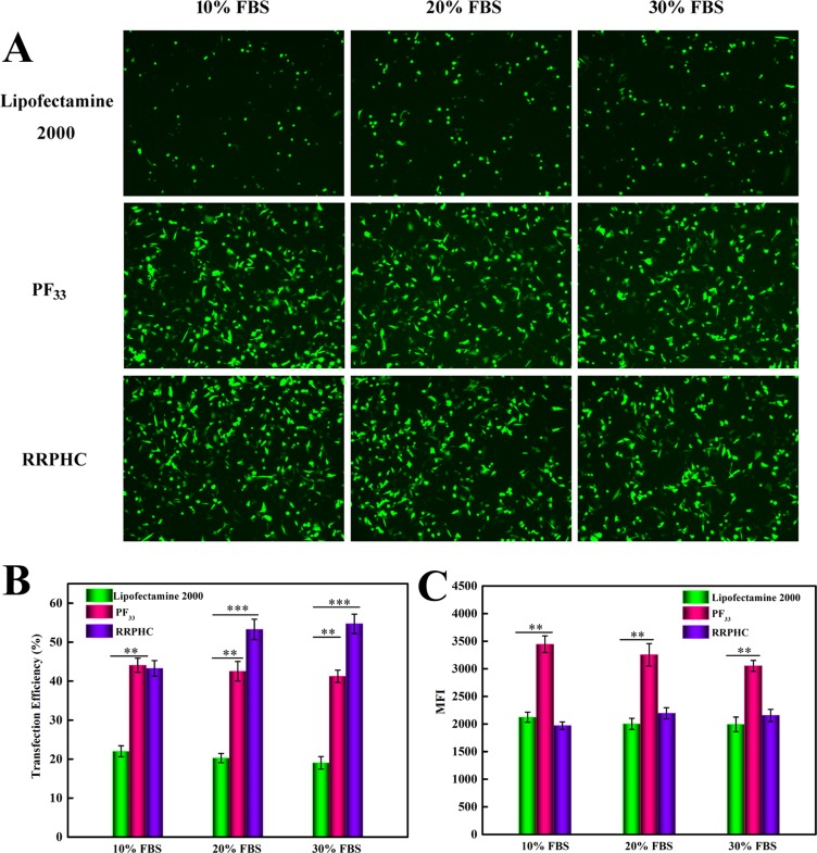 Comparison of the transfection efficiency of PF 33 /pGFP (PF 33 ), RRPHC/pGFP (RRPHC) and Lipofectamine 2000/pGFP (Lipofectamine 2000) in medium containing 10%~30% serum in SW 480 cell ( A ) Images taken by fluorescence microscope. ( B ,  C ) Quantitative analysis of positive GFP cells (%) and Mean Fluorescence Intensity (MFI) by flow cytometry.
