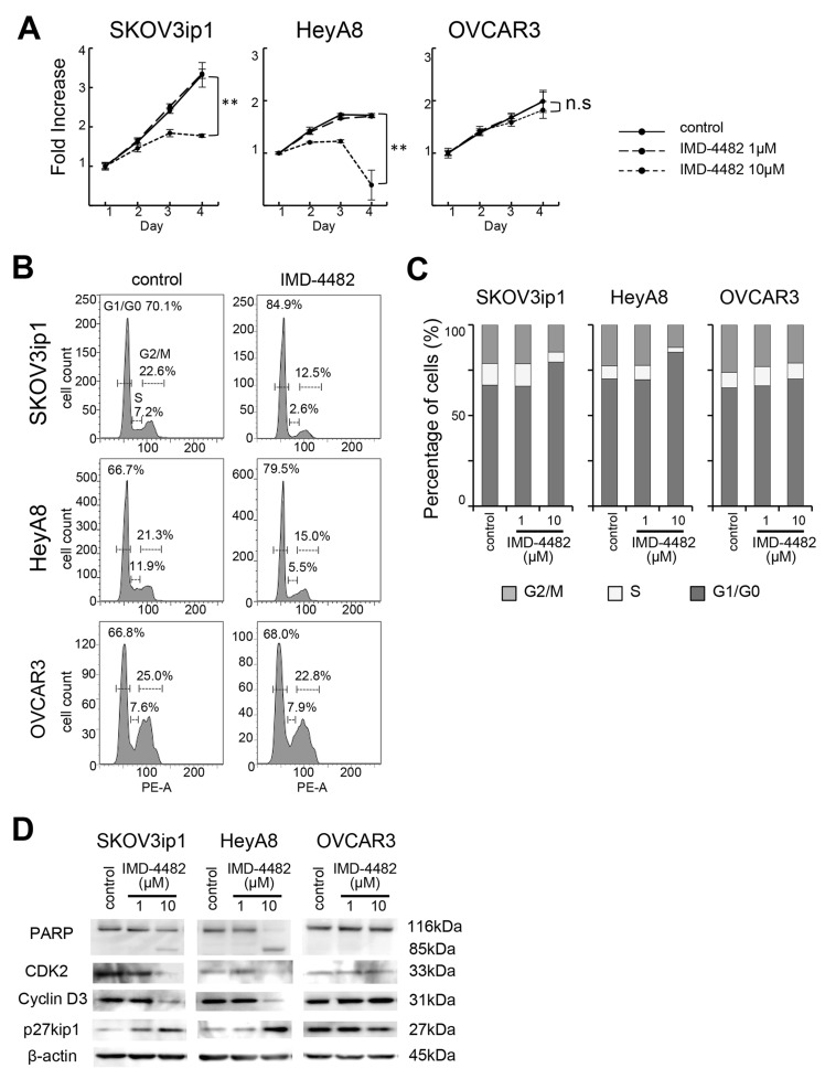 IMD-4482 suppressed proliferation and induced G0/G1 cell cycle arrest and apoptosis in <t>PAI-1-positive</t> ovarian cancer cells Effect of IMD-4482 on cell proliferation (A) . SKOV3ip1, HeyA8, and OVCAR3 cells were plated onto 96-well plates and cultured in DMEM containing 2% FBS with or without IMD-4482. Effect of IMD-4482 on cell cycle distribution (B and C) . Cells treated with or without IMD-4482 for 24 hours were stained with propidium iodine and analyzed by flow cytometry. Representative flow histograms (B), and percentages of cells in G0/G1, S, and G2/M phase (C) are shown. Western blot (D) . Cells were incubated with or without IMD-4482 for 24 hours. Cell lysates were immunoblotted with antibodies against PARP, CDK2, cyclin D3, and p27kip1. β-actin was used as a loading control.