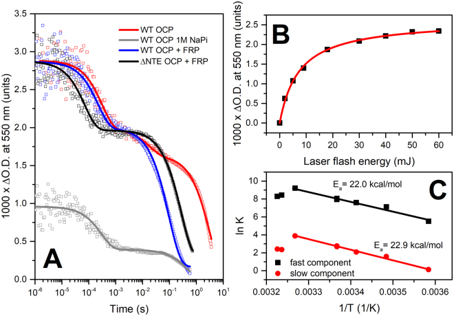 ( A ) flash-induced transitions of OCP absorption at 550 nm approximated by multiexponential decay: OCP – red, OCP in 1 M phosphate – grey; OCP in the presence of FRP (1/1.6 concentration ratio) – blue; ΔNTE OCP in the presence of FRP (1/1.6 concentration ratio) – black. Note the logarithmic timescale covering almost 7 orders of magnitude. ( B ) dependency of the photoconversion amplitude on the energy of the laser flash for OCP in the presence of FRP (1/1.6 concentration ratio). ( C ) Arrhenius plot of the fast (C1) and the slow (C3) components' rate constants of absorption changes of OCP in the presence of FRP. Experiments were conducted in the range of temperatures from 6 to 37 °C.