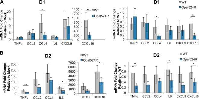 Cytokine gene expression is reduced during CHIKV Opal524R infection. (A, B) Twenty-four-day-old C57BL6/J mice were infected in the left rear footpad with 100 PFU of wild-type CHIKV ( n = 5) or Opal524R ( n = 5) or mock infected with diluent ( n = 3). At days 1 (A) and 2 (B) postinfection, mice were sacrificed and perfused intracardially with 1× PBS, and the ipsilateral foot was harvested in TRIzol. RNA was extracted, cDNA was generated, and cytokine gene expression was assessed by quantitative real-time PCR. Each cytokine was normalized to host 18S gene expression. Fold changes in gene expression relative to mock infection (left) and wild-type infection (right) are shown. Data are representative of two independent experiments. Statistical significance is indicated as follows: *, P