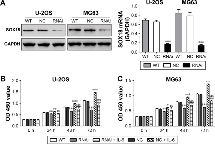 IL-6 promoted osteosarcoma cell growth via SOX18. Notes: ( A ) U-2OS and MG63 cells were transduced with SOX18 shRNA (RNAi) or control shRNA (NC). At 48 h after transduction, expression of SOX18 protein (upper panel) and GAPDH (lower panel) was analyzed. ( B ) U-2OS and ( C ) MG63 cells seeded in 96-well plates were transduced with shRNAs and treated with or without 50 ng/mL IL-6. After incubating for 0, 24, 48 and 72 h, CCK-8 assay was performed to determine cell proliferation. * P