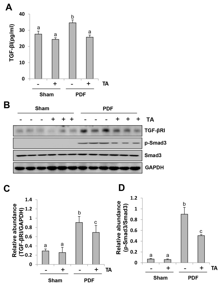 Inhibition of HDAC6 blocks activation of <t>TGF-β1</t> signaling in the peritoneum induced by high glucose dialysate Peritoneal membrane was collected at 28 days after PDF injection with or without administration of TA (70 mg/kg, daily). (A) The peritoneal tissue lysates was used for measuring TGF-β1 by the ELISA. (B) The peritoneal tissue lysates were subjected to immunoblot analysis with specific antibodies against TGFβ-RI, p-Smad3, Smad3, or <t>GAPDH.</t> (C) Expression level of TGFβ-RI was quantified by densitometry and normalized with GAPDH. (D) Expression level of p-Smad3 was quantified by densitometry and normalized with total Smad3. Data are represented as the means±SD (n=6). Means with different letters are significantly different from one another (P