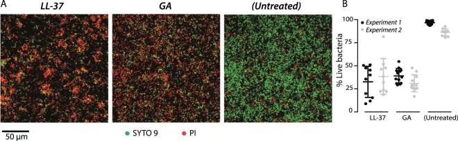 Antimicrobial effects of GA and LL-37 against preformed P . aeruginosa biofilms. ( A ) LIVE/DEAD staining of P . aeruginosa (PAO1) biofilms, initially grown for 24 h in IBIDI flow cells and treated for 3 h with 640 µg/ml LL-37 or GA. Living cells are stained with SYTO 9 (green) and dead cells are stained with PI (red). Scale bar 50 µm. ( B ) Quantification of the percentage of live cells in the biofilms after LL-37 or GA treatment or as untreated. Data were from two experiments with each average and standard deviation calculated from 10 images.