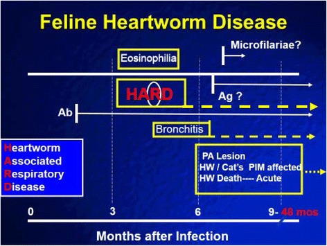 """Diagram of feline heartworm disease and HARD. Heartworm-associated respiratory disease (HARD) is induced at the first arrival of immature adult worms as early as 70 to 90 days after infection. The inflammation develops even if the cat """"self-cures"""" and all immature adults die, and no adult heartworms develop. The lung lesions continue for up to 8 months after infection and perhaps longer. The antibody (Ab) response is present if cats are started on <t>selamectin</t> 28 days after the infection even if immature adults do not reach the heart. The antibody response continues after the arrival of immature adults; in cats which develop only the immature adults with HARD, the antibody response is present in 50% of the cats 8 months after the infection. Cats that develop the adult heartworms continue to live for up to 4 years, often with no symptoms, and the cats develop a decreased responsiveness of their pulmonary intravascular macrophages (PIM). When adult heartworms eventually die, acute symptoms may develop"""