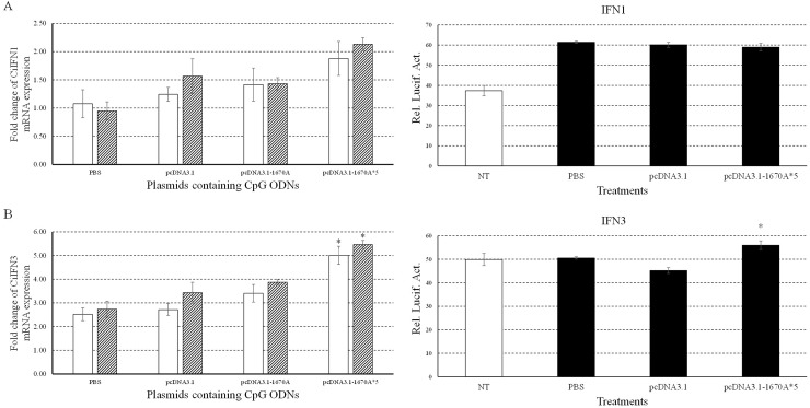 Immune responses of CiIFN1/3 to plasmids containing CpG ODNs Left, the mRNA expressions of CiIFN1 (A) and CiIFN3 (B) were measured at 24 and 48 h post-infection. CIK cells were stimulated with PBS (control) or plasmids containing CpG ODNs and infected with GCRV. Other captions were the same as Figure 3 . Right, CIK cells were co-transfected with 800 ng of pRL-TK and IFN1pro-luc (A) or IFN3pro-luc (B) in 24-well plates. At 16 h post-transfection, the cells were stimulated with PBS (control) or plasmids and infected with GCRV for 16 h or uninfected. Dual luciferase reporter assays were conducted at 12 h after GCRV infection. Treatment durations in this assay was far shorter than those in qRT-PCR which caused different results. Error bars indicate standard deviation (n = 4). Asterisks indicate significant difference from control (*, P ≤ 0.05).