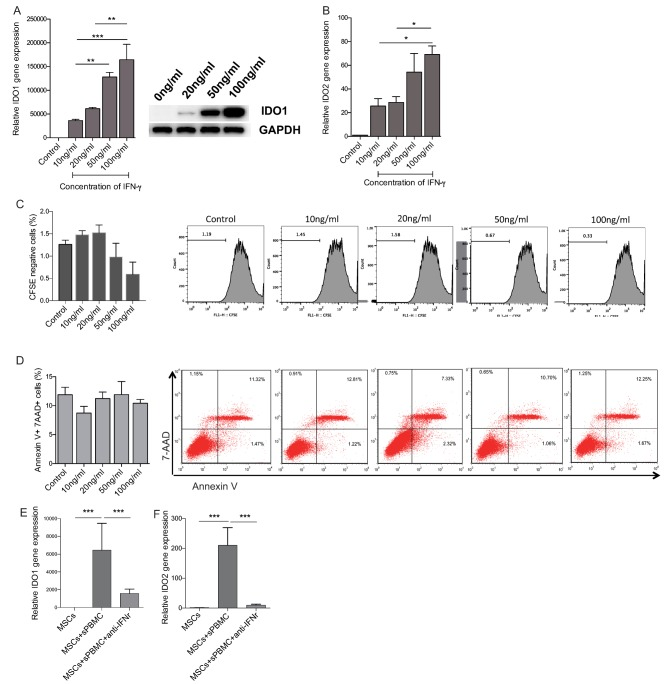 Recombinant human IFN‐γ dose dependently enhance indoleamine 2,3‐dioxygenase expression. In vitro, IFN‐γ stimulated umbilical cord‐derived mesenchymal stem cells (UC <t>MSCs)</t> to produce <t>IDO1</t> (A) as well as IDO2 (B) , both had dose‐dependent manners. High dose IFN‐γ slightly inhibited UC MSCs proliferation (C) , but did not affect MSCs apoptosis (D) . The addition of anti‐IFN‐γ significantly inhibited the production of IDO1 (E) as well as IDO2 (F) by MSCs induced by lupus patients' peripheral blood mononuclear cell. *, p