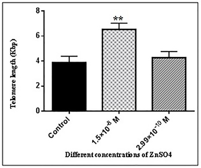 Absolute telomere length measurement of hADSCs in the presence of different concentration of ZnSO 4 for 48 hours of incubation. Cells were seeded at a density of 5×10 4 cells/wells for about 48 hours in the presence of 1.5×10 −8 and 2.99×10 −10 M ZnSO 4 . Following, Genomic DNA was isolated, telomere and single copy gene standard curve was created. Real-time PCR technique was used to measure the absolute telomere length. The data were analyzed as kb/reaction and the genome copies/reaction for the telomere and the SCG. As described in results section, 1.5×10 −8 M ZnSO 4 were significantly increased the telomere length of hADSCs (**P