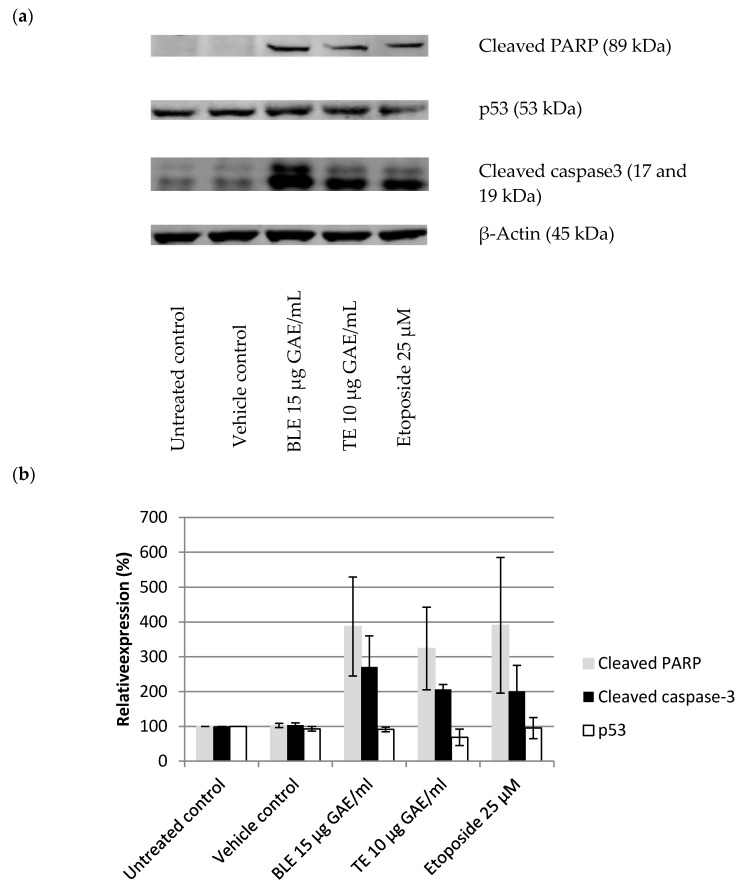 "BLE and TE effect on proteins markers for apoptosis in HCA-7 cell line. ( a ) Western blot"" Cells were treated for 24 h with bay leaf (BLE 15 μg GAE/mL), turmeric (TE 10 μg GAE/mL), and Etoposide 25 μM, which was used as a positive control for caspase-3 activation. ( a ) Quantitative analysis of Western blot bands. Protein expression was normalised against β-Actin and expressed relative to untreated control, where control is 100%; ( b ) Untreated control contained just DMEM with 10% FBS (vehicle control–ethanol was 0.4% ( v / v ), the highest amount found in the extracts). Bay leaf in ethanol (BLE), turmeric in ethanol (TE), n = 3, ±SEM."
