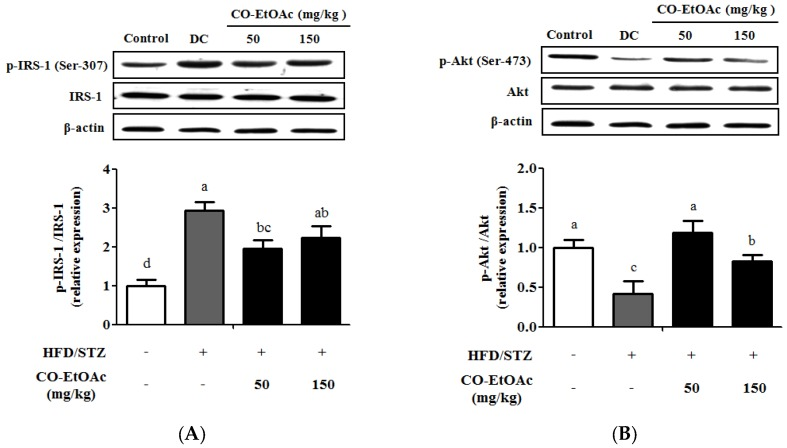 Effects of CO-EtOAc on the regulation of insulin receptor-mediated signaling. Relative protein levels of hepatic: ( A ) IRS-1 (phosphorylated IRS-1 at Ser-307 and total IRS-1); and ( B ) <t>Akt</t> (phosphorylated Akt at <t>Ser-473</t> and total Akt) were detected by Western blot analysis. Data are represented as mean ± SEM ( n = 8–10). Values with different letters are statistically different ( p