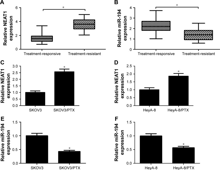 Expressions of NEAT1 and miR-194 in PTX-resistant ovarian cancer tissues and cells. Notes: qRT-PCR analysis of NEAT1 ( A ) and miR-194 ( B ) expressions in 18 treatment-responsive patients and 14 treatment-resistant patients. qRT-PCR analysis of NEAT1 ( C and D ) and miR-194 ( E and F ) expressions in parental ovarian cancer cells (SKOV3 and HeyA-8) and PTX-resistant ovarian cancer cells (SKOV3/PTX and HeyA-8/PTX). * P