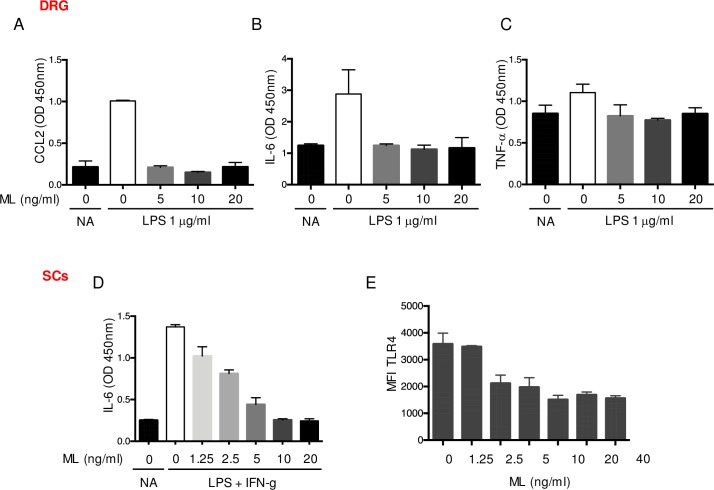 Anti-inflammatory effects of mycolactone on primary DRG and Schwann cells. Production of CCL-2 (A), IL-6 (B) and TNF-α (C) by mouse dorsal root ganglion (DRG) cells exposed to subtoxic doses of mycolactone (ML) or equivalent volume of vehicle (DMSO) for 30 min prior to 16 h of stimulation with 1 μg/ml LPS. Controls (NA) are vehicle-treated, non-activated cells. (D) IL-6 production by Schwann cells (SCs) exposed to ML or vehicle (DMSO) for 30 min prior to stimulation with 1 μg/m LPS + 20 ng/ml IFN-γ or not (NA). (E) Flow cytometry analysis of TLR4 surface expression by SCs exposed to increasing doses of ML for 16 h. Data are mean values of OD or MFI ± SEM of triplicates, and are representative of two independent experiments.