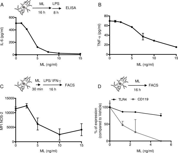 Mycolactone suppresses the production of pro-inflammatory mediators by activated microglia. IL-6 (A) and TNF-α (B) production by primary mouse cortical microglia exposed to mycolactone (ML) or vehicle for 16 h, prior to a 8 h activation with 100 ng/ml LPS. (C) Flow cytometry analysis of intracellular NOS-2 in primary cortical microglia pre-treated with ML for 30 min, prior to 16 h activation with 100 ng/ml LPS + 20 ng/ml IFN-γ, in presence of ML. (D) Flow cytometry analysis of surface expression of TLR4 (black) and IFN-γ receptor (CD119, gray) in microglia exposed to ML for 16 h. Data are means IL-6 or TNF-α levels ± SEM (A-B), mean fluorescence intensity ± SEM (C) and mean percentage of suppression compared to vehicle (D) of duplicates, and are representative of two independent experiments.