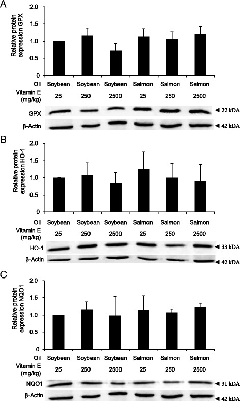 Effect on protein expression of Nrf2 targets. Relative Protein expression of GPX ( a ), HO-1 ( b ) and NQO1 ( c ) in the liver of rats fed diets with either soybean oil or salmon oil with various vitamin E concentrations. Bars represent relative protein level expressed as fold of control (diet with soybean oil and 25 mg/kg vitamin E) and are means ± SD from 12 animals per group. Representative immunoblots specific to GPX ( a ), HO-1 ( b ), NQO1 ( c ) and ß-actin as respective loading control are shown for one animal per group