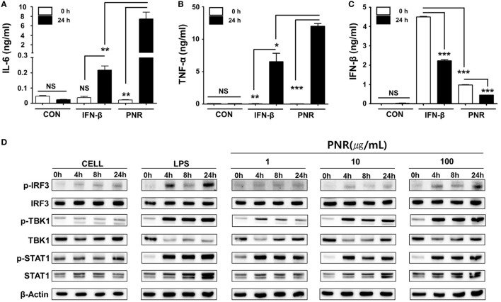 Induction of pro-inflammatory cytokines and activation of type-I interferon (IFN) by Panax notoginseng root (PNR) in vitro . (A–C) RAW 264.7 cells were treated with DMEM containing 10% fetal bovine serum (FBS) alone, 1,000 U/mL recombinant mouse IFN-β, or 100 µg/mL PNR and incubated at 37°C and 5% CO 2 . Supernatant from each group was harvested at 0 and 24 h and clarified by centrifugation at 2,500 g for 10 min at 4°C. Clarified supernatants were dispensed into murine interleukin (IL)-6, tumor necrosis factor (TNF)-α, and IFN-β capture antibody-coated enzyme-linked immunosorbent assay plates to measure cytokine secretion. The test was performed in duplicate. (D) Western blotting was performed using the whole-cell lysates of macrophage-type cells treated with or without PNR (1, 10, and 100 µg/mL) to assess the expression of the nonphosphorylated and phosphorylated forms of IRF3, TANK-binding kinase 1 (TBK1), STAT1, and β-actin over time. Similar results were obtained, and the experiment was performed three times independently. Bar graph (mean ± SEM) statistics were determined using two-way ANOVA with Bonferroni's correction (posttest), *** P