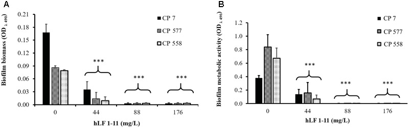 Effect of hLF 1-11 on biofilm formation by three Candida parapsilosis strains. Yeast cells were co-incubated with different concentrations of hLF 1-11 for 24 h at 37°C. The peptide activity was assessed in terms of biofilm biomass (A) and metabolic activity (B) . Data are expressed as means of three independent experiments ± SEM. ∗∗∗ P ≤ 0.001.