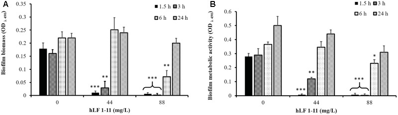 Effect of hLF 1-11 on pre-adhered cells of C. parapsilosis. Yeast cells were incubated at different time points (1.5, 3, 6, and 24 h) and then co-incubated with hLF 1-11 at two different concentrations for 24 h at 37°C. The peptide anti-biofilm activity was assessed in terms of reduction of biofilm biomass (A) and metabolic activity (B) . Data are expressed as means of three independent experiments ± SEM. ∗ P ≤ 0.05; ∗∗ P ≤ 0.01; ∗∗∗ P ≤ 0.001.