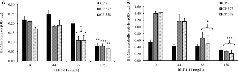 Effect of hLF 1-11 on mature biofilm of C. parapsilosis. Yeast cells were incubated for 24 h and then co-incubated with hLF 1-11 at different concentrations for 24 h at 37°C. The peptide anti-biofilm activity was assessed in terms of reduction of biofilm biomass (A) and metabolic activity (B) . Data are expressed as means of three independent experiments ± SEM. ∗ P ≤ 0.05; ∗∗ P ≤ 0.01; ∗∗∗ P ≤ 0.001.
